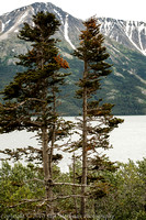 Scenes along the Klondike Highway from Skagway to the Yukon Territory