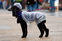 Am I the only dog with a rain coat and rain hat?
