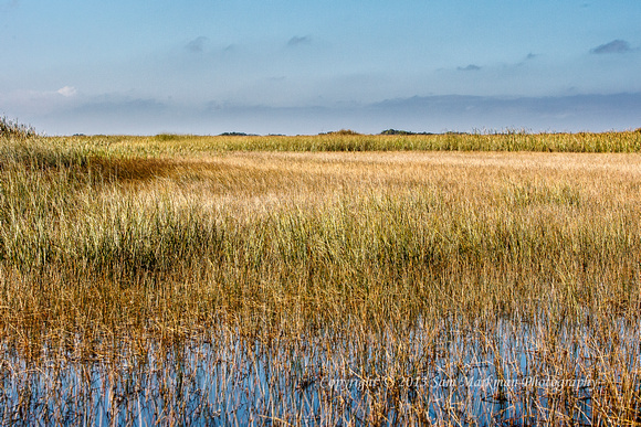 Everglades grasses stretch as far as the eye can see!